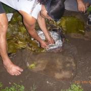 Marquesas - Teil I 045_624x468