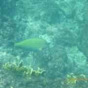 Marquesas - Teil I 087_624x468
