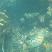 Marquesas - Teil I 098_624x468