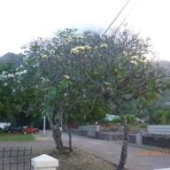 Marquesas - Teil I 110_624x468