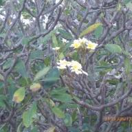 Marquesas - Teil I 112_624x468