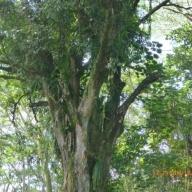 Marquesas - Teil I 120_624x468