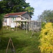 Tonga - Teil II 026_624x468