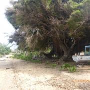 Tonga - Teil II 027_624x468