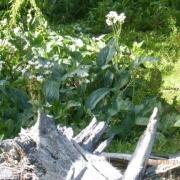 Ushuaia 166_624x468